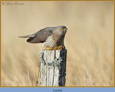 cuckoo-30.jpg