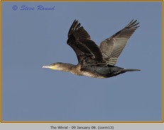 cormorant-13.jpg