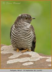 cuckoo-09.jpg