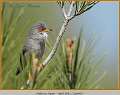 balearic-warbler-03.jpg