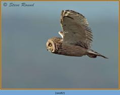 short-eared-owl-82.jpg