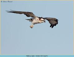 osprey-37.jpg
