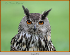 eagle-owl-01c.jpg
