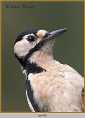gt-s-woodpecker-21.jpg