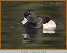 tufted-duck-26.jpg