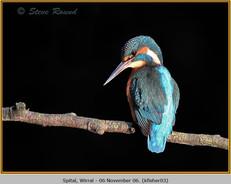 kingfisher-03.jpg