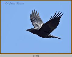 raven-19.jpg