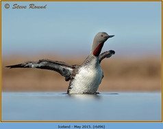red-throated-diver- 96.jpg
