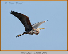 purple-heron-04.jpg