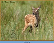 red-deer-71.jpg