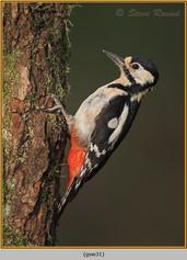 gt-s-woodpecker-31.jpg