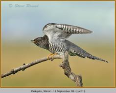 cuckoo-01.jpg
