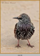 starling-38.jpg