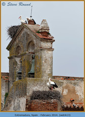 white-stork-13.jpg