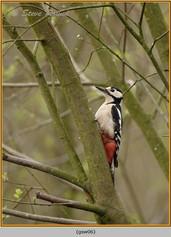 gt-s-woodpecker-06.jpg