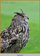 eagle-owl-10c.jpg