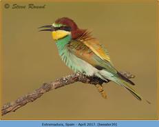 bee-eater-39.jpg