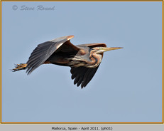 purple-heron-01.jpg