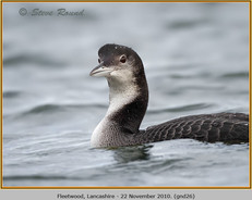 great-northern-diver-26.jpg