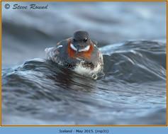 red-necked-phalarope-31.jpg