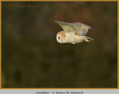 barn-owl-12.jpg