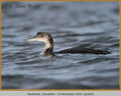 great-northern-diver-24.jpg
