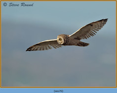short-eared-owl-76.jpg