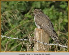 cuckoo-18.jpg