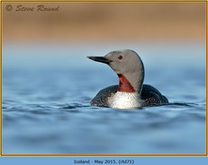red-throated-diver- 71.jpg