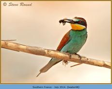 bee-eater-08.jpg