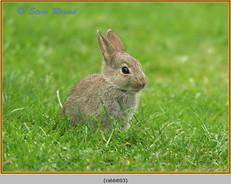 rabbit-03.jpg