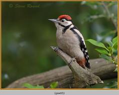 gt-s-woodpecker-05.jpg