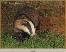 badger-44.jpg