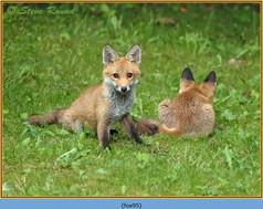 fox-95.jpg