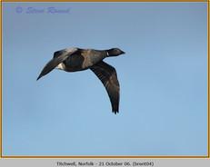 brent-goose-04.jpg