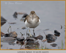 common-sandpiper-15.jpg