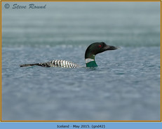 great-northern-diver-42.jpg