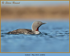 red-throated-diver- 83.jpg