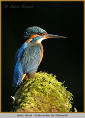 kingfisher-08.jpg