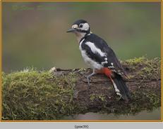 gt-s-woodpecker-39.jpg