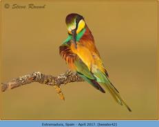 bee-eater-42.jpg