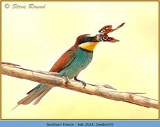 bee-eater-05.jpg