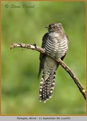 cuckoo-05.jpg