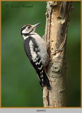 gt-s-woodpecker-43.jpg