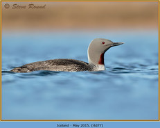 red-throated-diver- 77.jpg