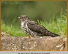 cuckoo-08.jpg