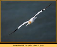 gannet-18.jpg