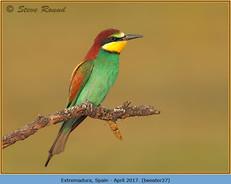 bee-eater-27.jpg