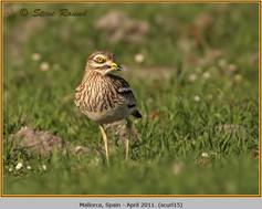 stone-curlew-15.jpg