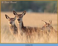 red-deer-54.jpg